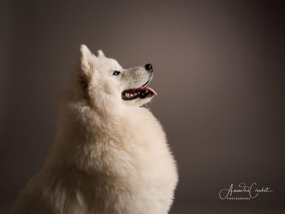 faire photographier votre chien à Grenoble